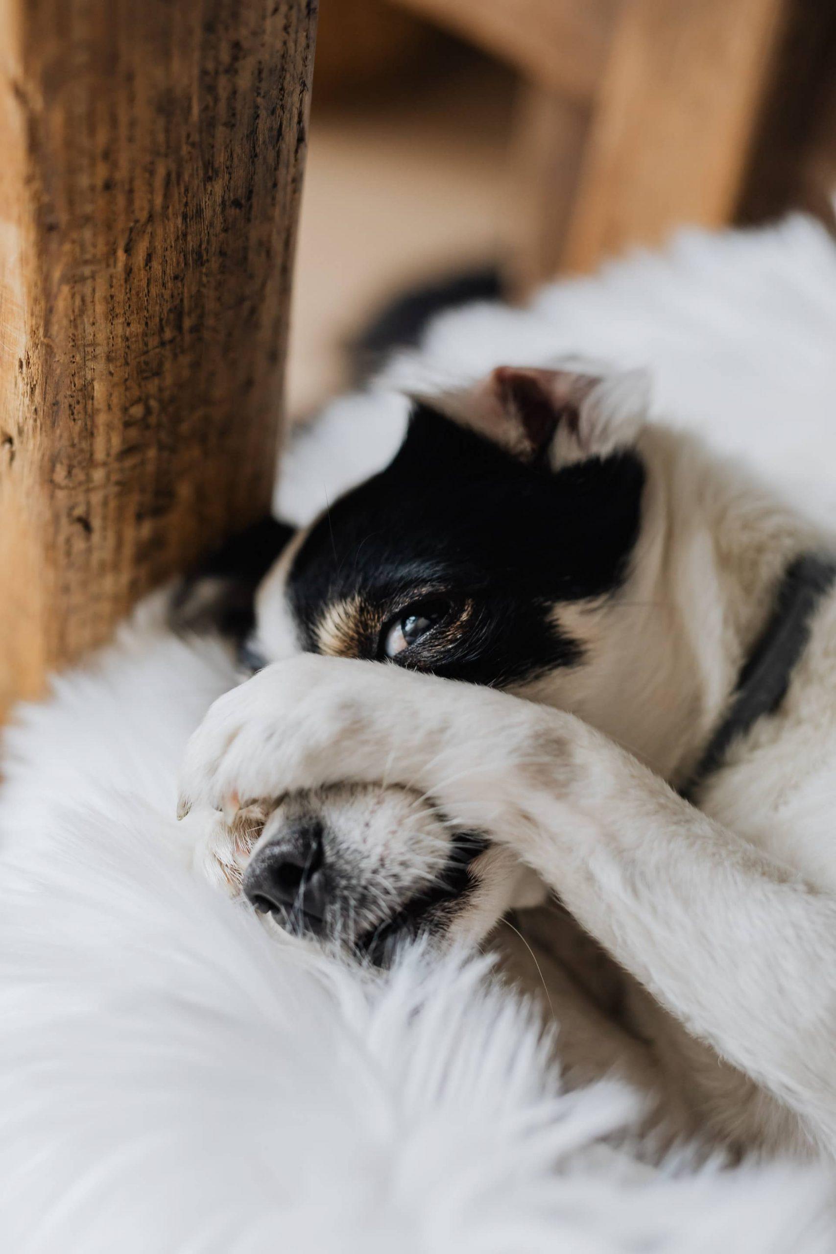 בריחת שתן כלבים